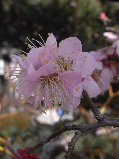 春にむけて~家のお花(其の三)_e0152493_2224835.jpg