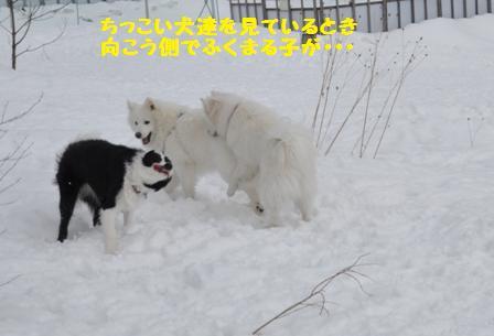 f0212597_8384432.jpg