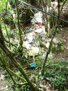 アジア学院の大柳由紀子さん来比。一緒にダータ山国立公園の最後の原生林を視察。_b0128901_19322740.jpg