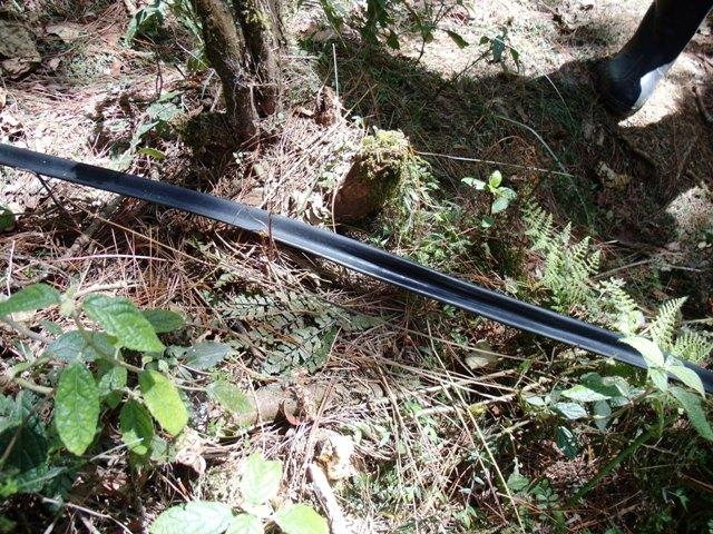 アジア学院の大柳由紀子さん来比。一緒にダータ山国立公園の最後の原生林を視察。_b0128901_19341261.jpg