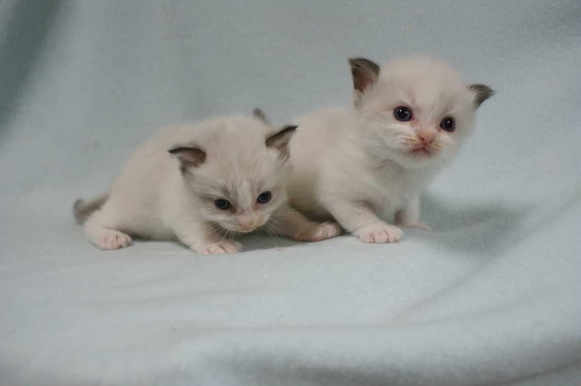 子猫生まれました。_e0033609_2125746.jpg