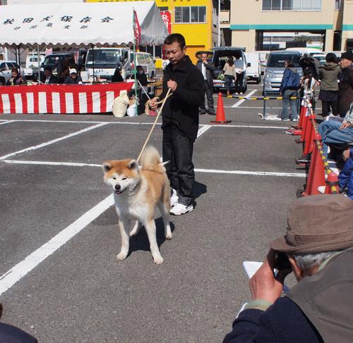 秋田犬保存会静岡支部大会2011_d0068664_22451892.jpg