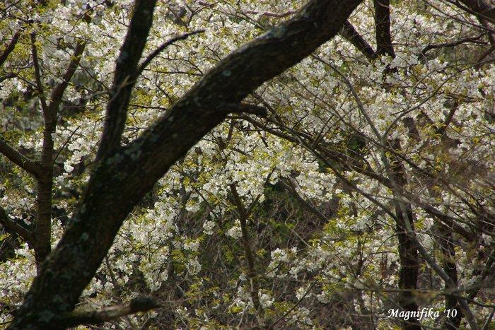 花 Blossoms & Flowers _e0140365_1001943.jpg