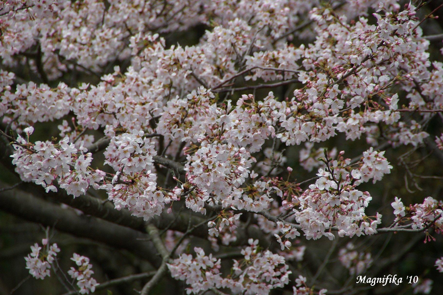 花 Blossoms & Flowers _e0140365_100595.jpg