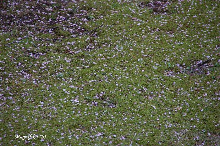 花 Blossoms & Flowers _e0140365_1352256.jpg