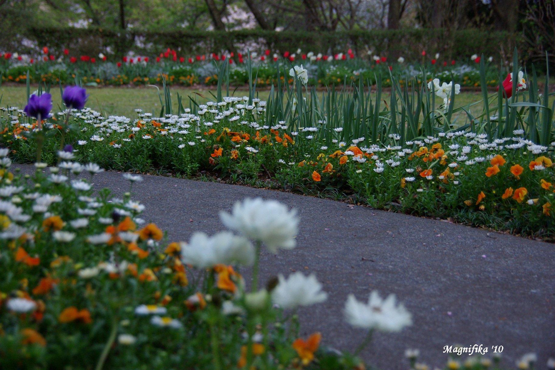 春の庭にようこそ! Welcome to my garden!_e0140365_14131823.jpg