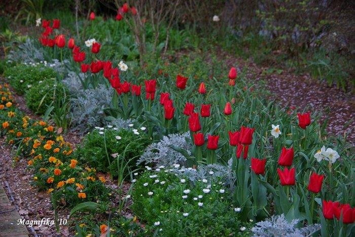 春の庭にようこそ! Welcome to my garden!_e0140365_14141454.jpg