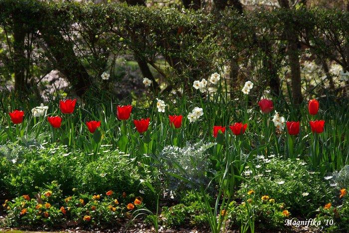 春の庭にようこそ! Welcome to my garden!_e0140365_14143559.jpg