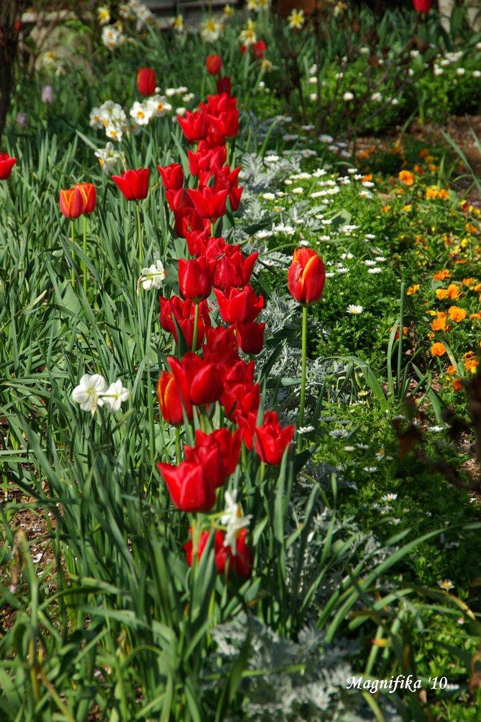 春の庭にようこそ! Welcome to my garden!_e0140365_14145589.jpg