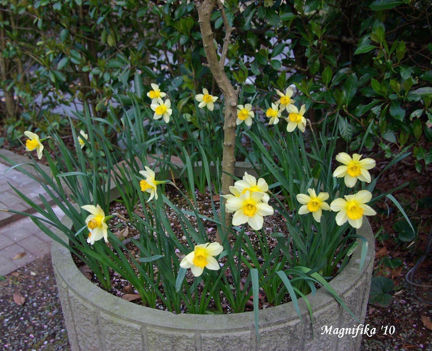 春の庭にようこそ! Welcome to my garden!_e0140365_14152372.jpg