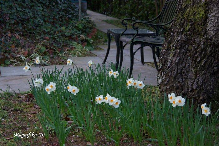 春の庭にようこそ! Welcome to my garden!_e0140365_14154219.jpg