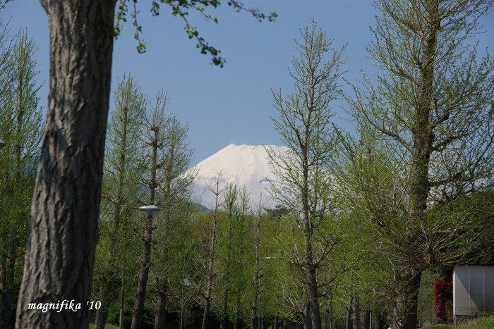 今日の富士山 Today\'s Mt. Fuji 4/25 \'10_e0140365_20393937.jpg
