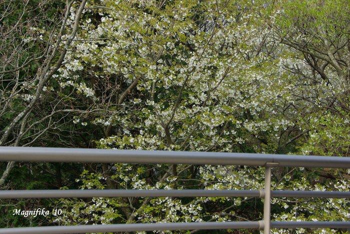 花 Blossoms & Flowers _e0140365_9592119.jpg