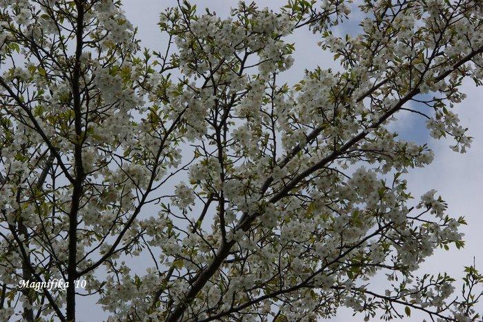 花 Blossoms & Flowers _e0140365_959393.jpg