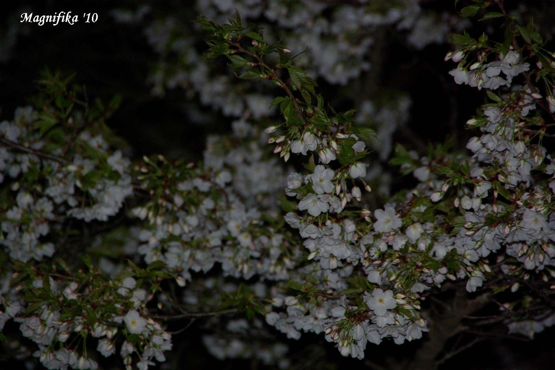 花 Blossoms & Flowers _e0140365_9595287.jpg