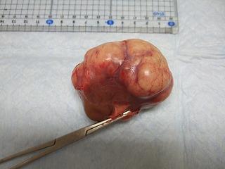 腎臓腫瘍_b0059154_13142310.jpg