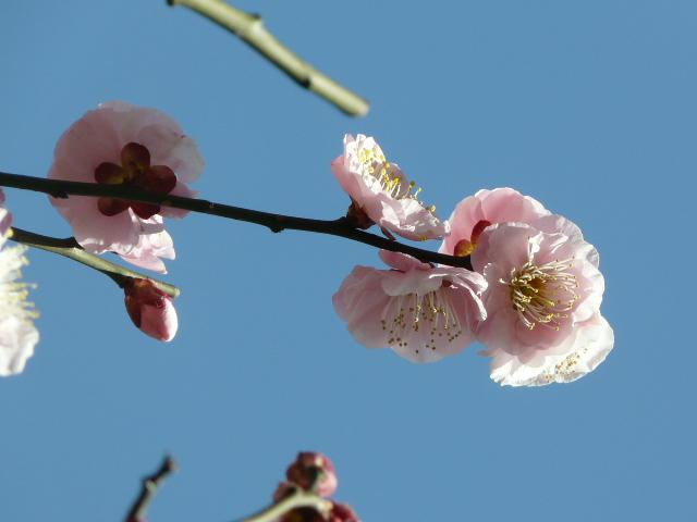 神代植物公園の思いのまま_e0145782_155253100.jpg