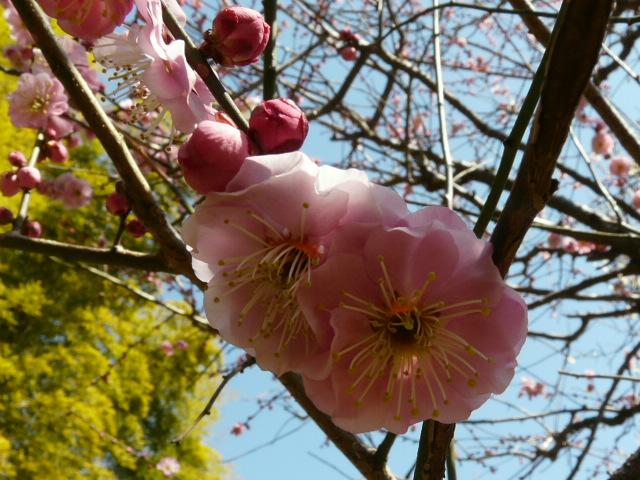 神代植物公園の思いのまま_e0145782_15531823.jpg