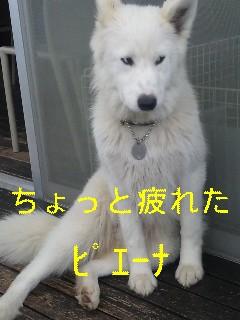 d0148408_10432153.jpg
