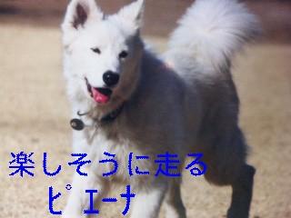 d0148408_1043218.jpg