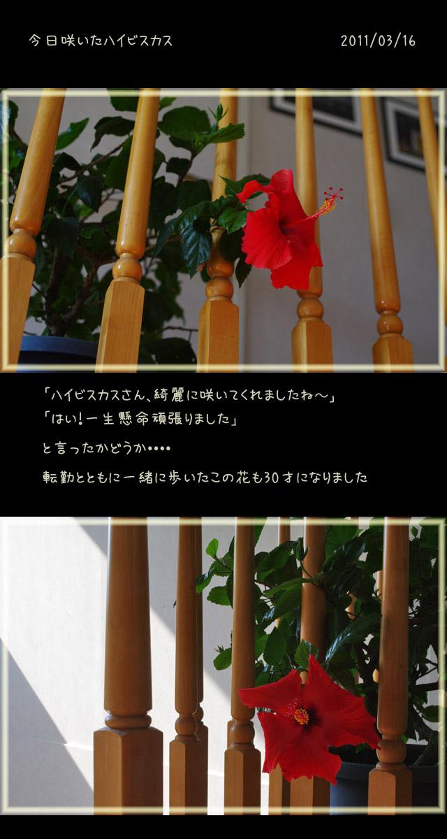 b0019313_1852328.jpg