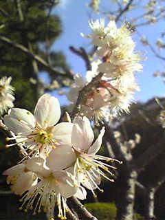 春_e0103327_16151424.jpg