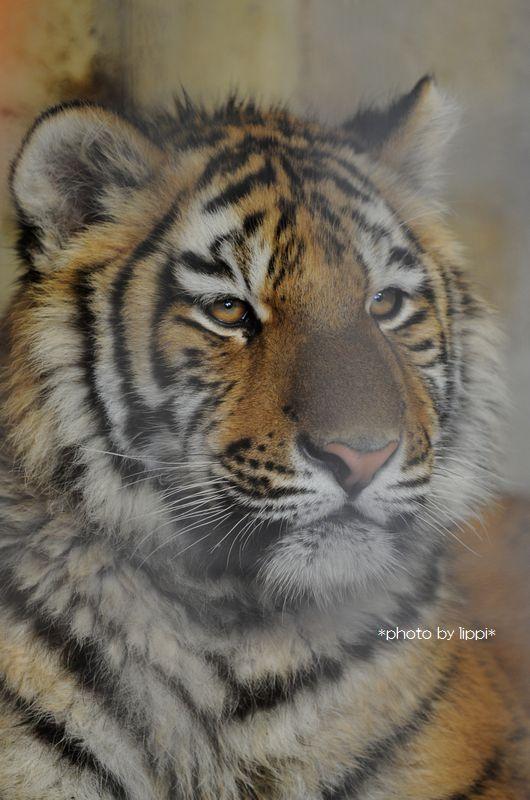 ず~どすぇ。動物園大学in京都_b0024758_2351694.jpg
