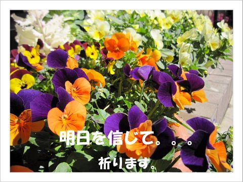 b0104592_13115396.jpg