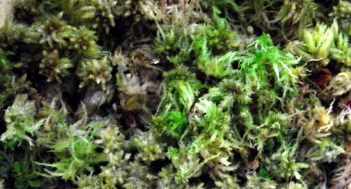 小型ランの植え替えと、水苔の再生_a0136293_17225398.jpg