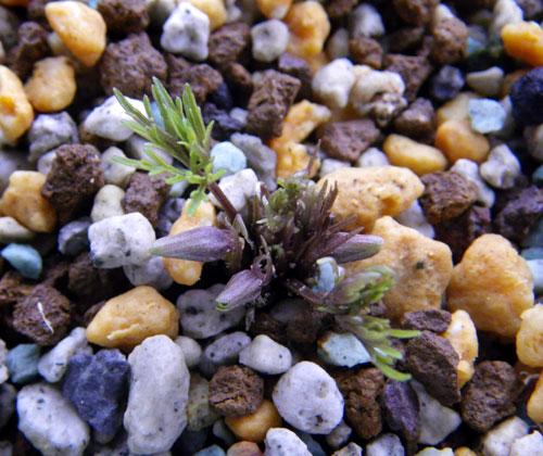 小型ランの植え替えと、水苔の再生_a0136293_17231889.jpg