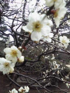2011.3.17 近況&27日講座開催_d0027507_1102963.jpg