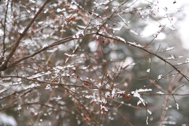 不思議な氷の枝_f0091207_0372861.jpg