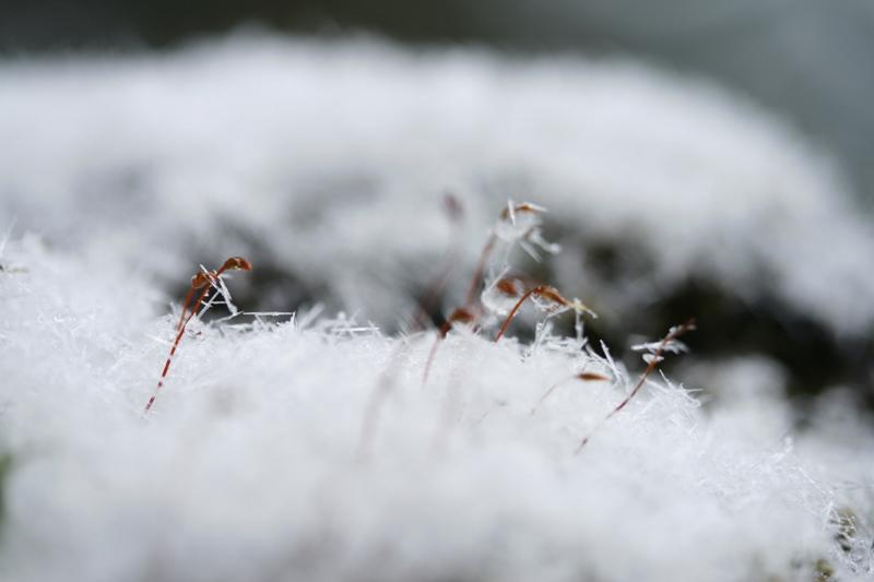 尖った雪_f0091207_13316.jpg
