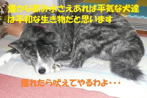 f0121712_0445115.jpg
