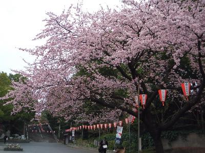 それでも必ず春は来る_f0193752_4265580.jpg