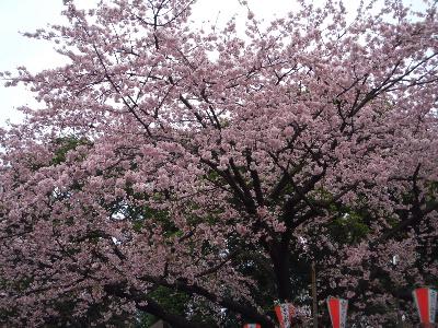 それでも必ず春は来る_f0193752_4301667.jpg