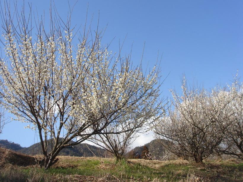 春の息吹はもうすぐ_e0175370_13132642.jpg