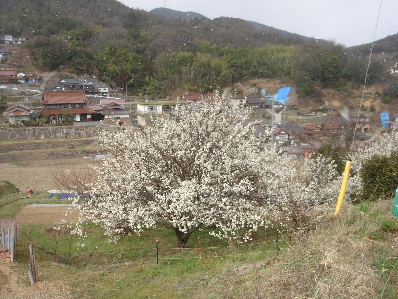 春の息吹はもうすぐ_e0175370_13141723.jpg