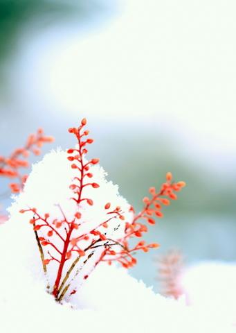 雪_b0137399_18465283.jpg