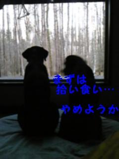 f0148927_943912.jpg