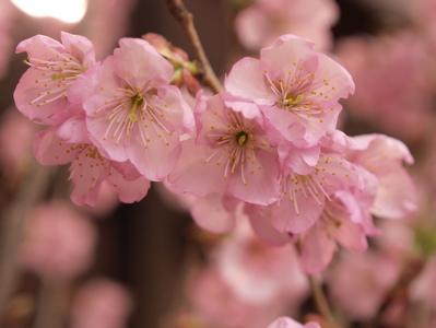 桜アイス_f0232994_305225.jpg