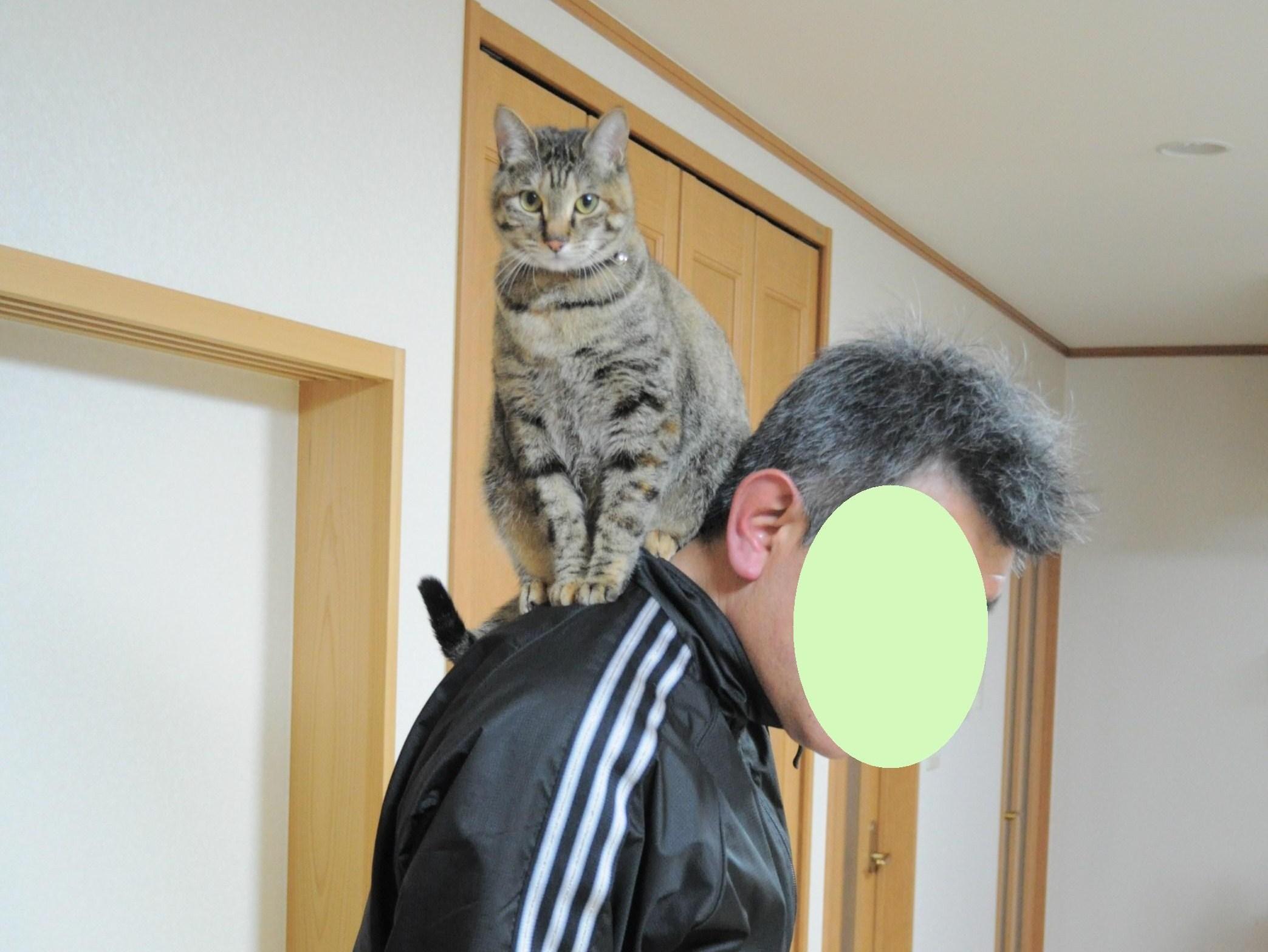 ウマウマかぼちゃん_a0126590_815114.jpg
