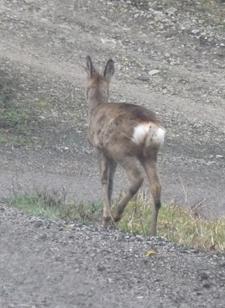 バンビに会いました♪_f0106597_5465794.jpg