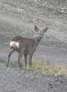 バンビに会いました♪_f0106597_5472733.jpg