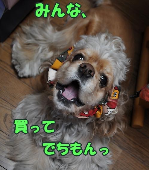 b0067012_15205293.jpg