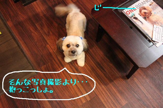素晴らしき日本人!!_b0130018_13121698.jpg