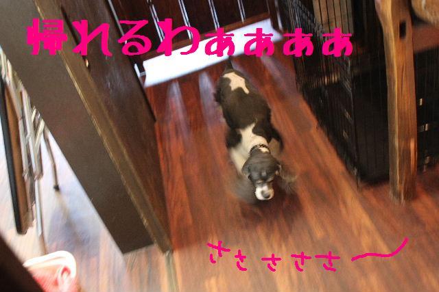 素晴らしき日本人!!_b0130018_13145997.jpg