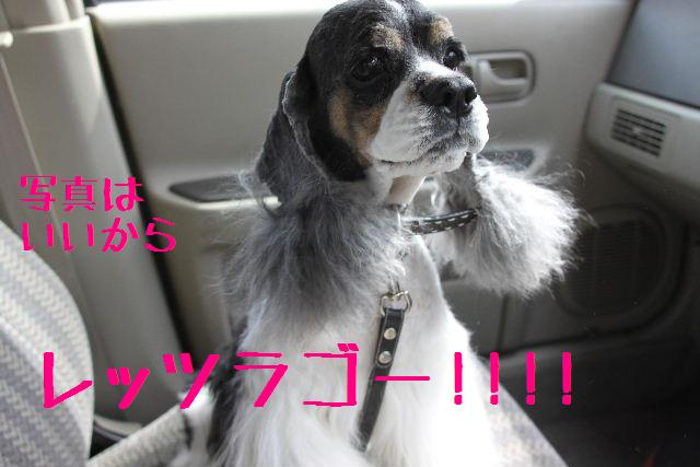 素晴らしき日本人!!_b0130018_13151932.jpg