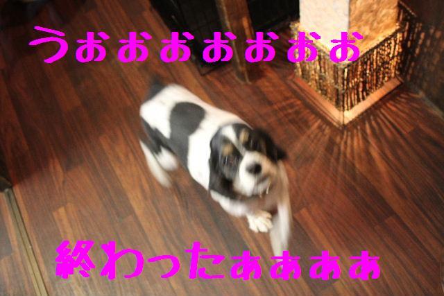 素晴らしき日本人!!_b0130018_1315471.jpg