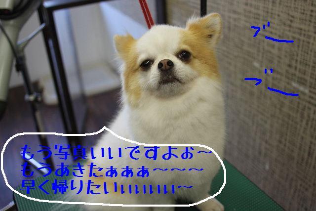 素晴らしき日本人!!_b0130018_1317285.jpg